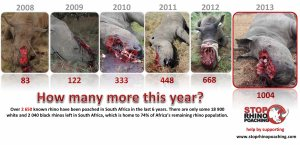 In 2014 there have already been 86 rhinos poached.