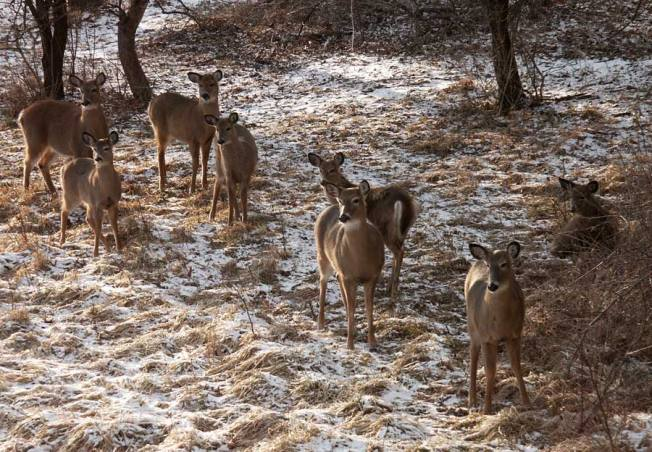 Deer-herd-web-2-26-06