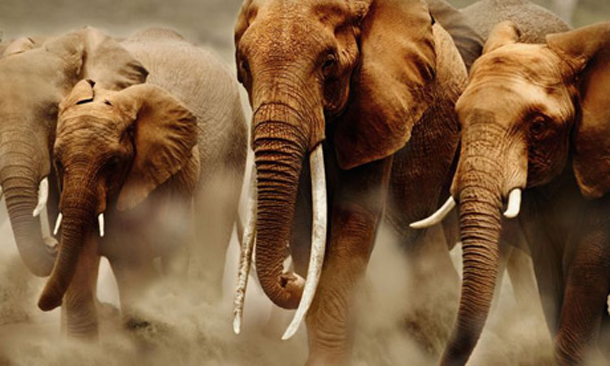 elephant-poaching-sms1